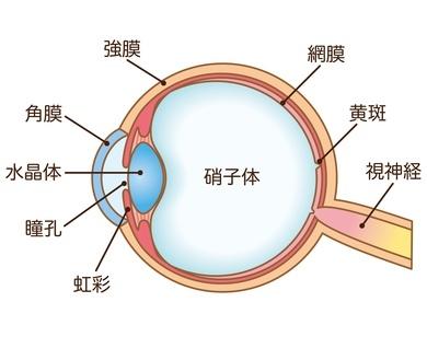 目の病気・治療内容について